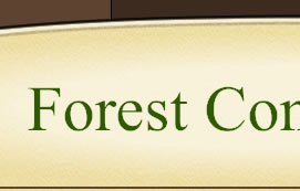 Forest Condominium